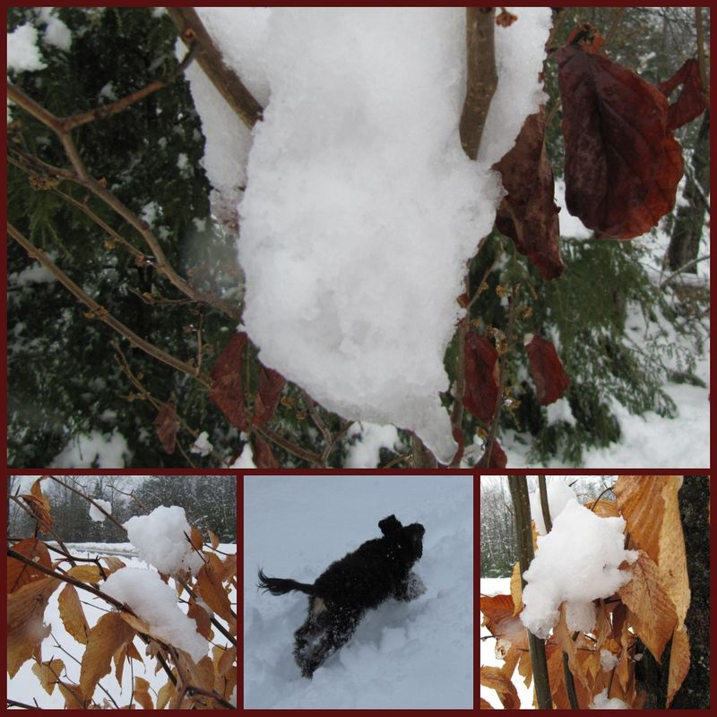 Snowdaycollage